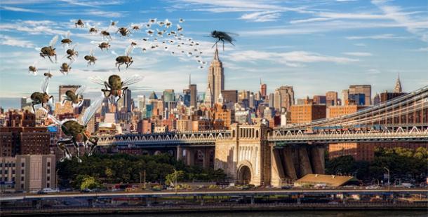 New York'un Başı Sineklerle Dertte