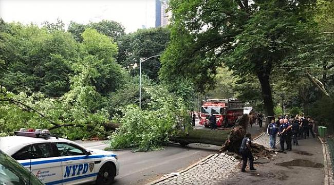 Central Park'ta Ağaç Devrildi 4 Yaralı