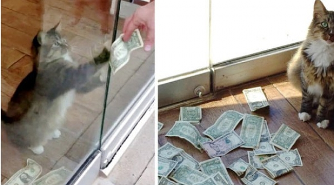 Evsizler İçin Para Alan Kedi