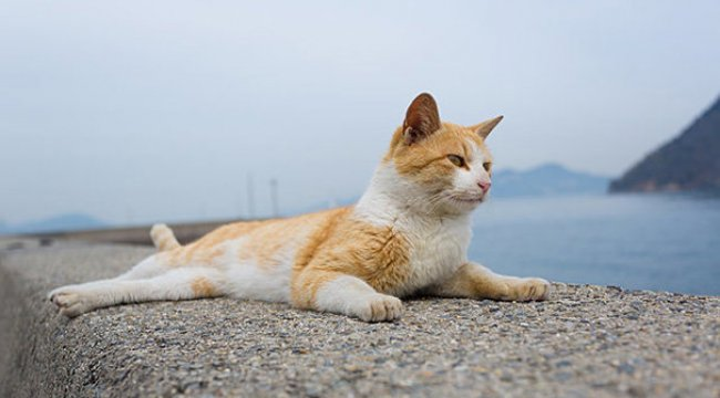Bir numaralı şüpheli: Sokak kedisi