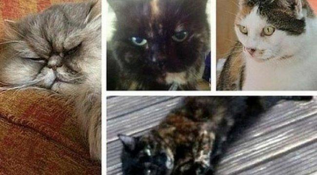 Seri hayvan katili her yerde aranıyor! Yüzlerce hayvan öldürdü...