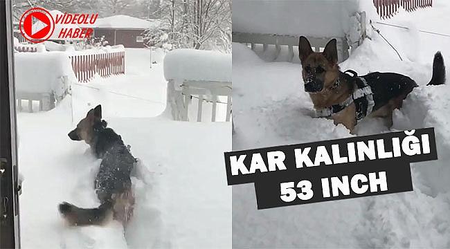 Pennsylvania'da Köpeğin Kar Keyfi
