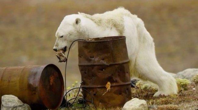 Küresel ısınmanın acı fotoğrafı!