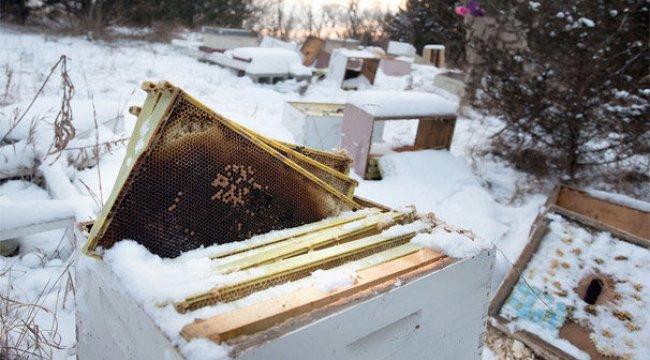 2 çocuk, 500 bin arının ölümüne Neden Oldu