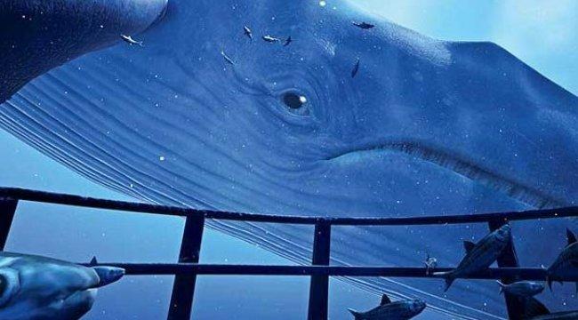 Uzmanlardan Mavi Balina Uyarısı