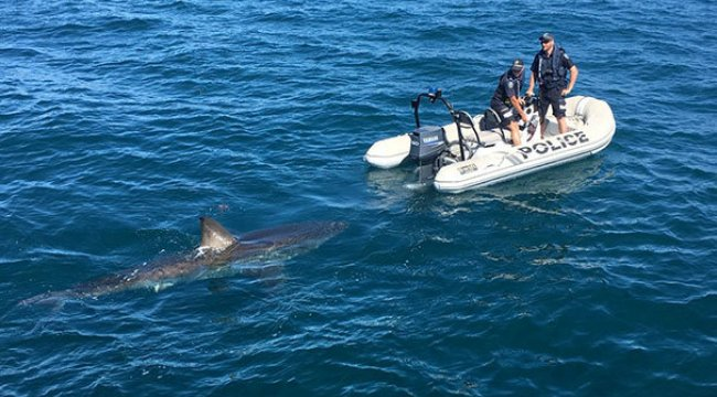 Avustralya'da deniz polisine köpek balığı engeli