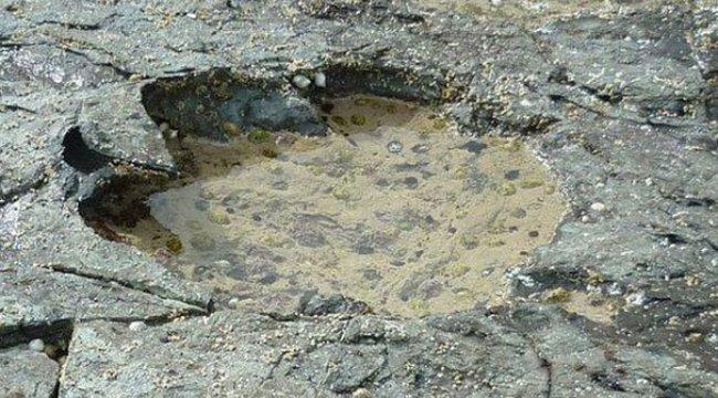 Ve bulundu! 170 milyon yıl öncesine ait...
