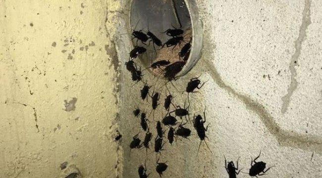 Avrupa ülkesinde şok görüntü! Bakımsızlıktan her yeri böcekler istila etti