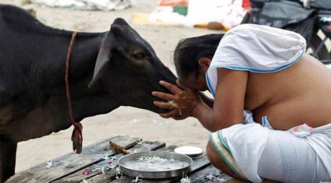 Hindistan'da inek kestiği iddia edilen bir Müslüman linç edildi