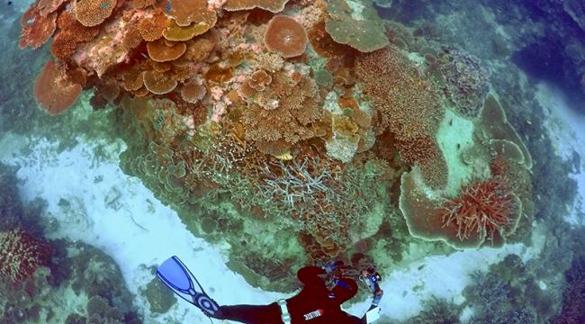Mercanları kurtarmak için 400 milyon dolar
