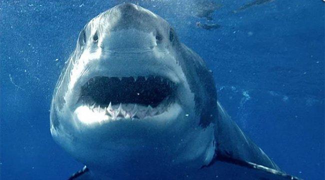 42 yıl sonra büyük beyaz köpek balığı gözlemlendi
