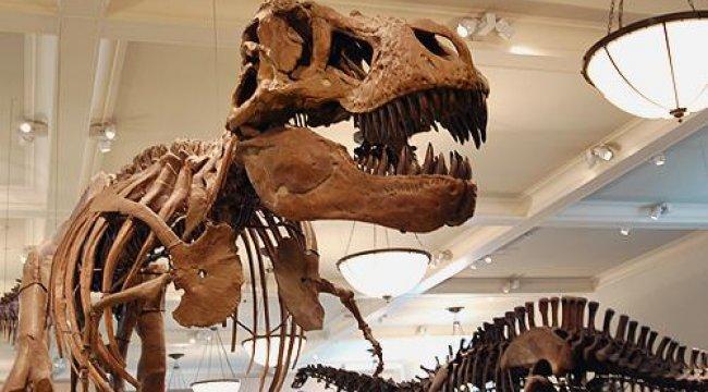 Dinozorlar ile ilgili şaşırtan keşif