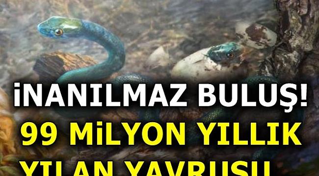 99 milyon yıllık yılan yavrusu...