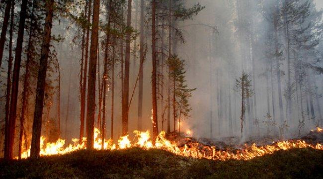 İsveç'te peş peşe orman yangınları