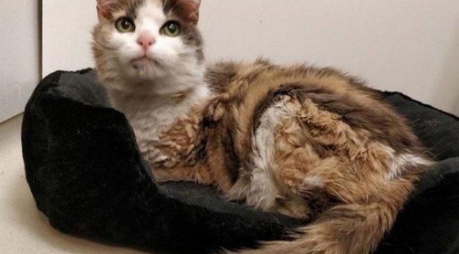Kayıp kedi 17 yıl sonra sahibine geri döndü