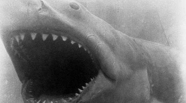 ABD'de köpekbalığı saldırısı!