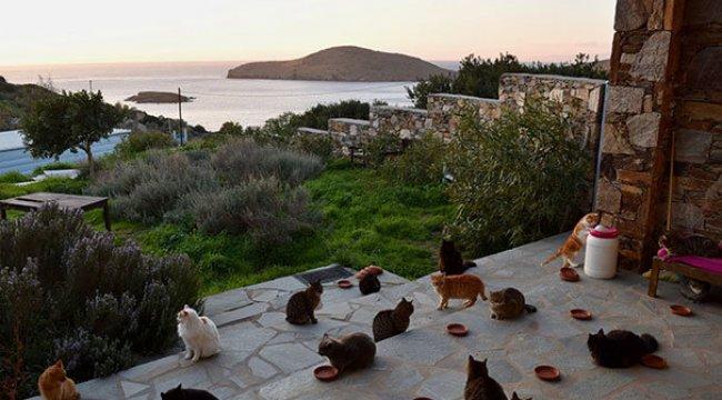 Siros adasında kedi bakıcılığı ilanına 200 başvuru