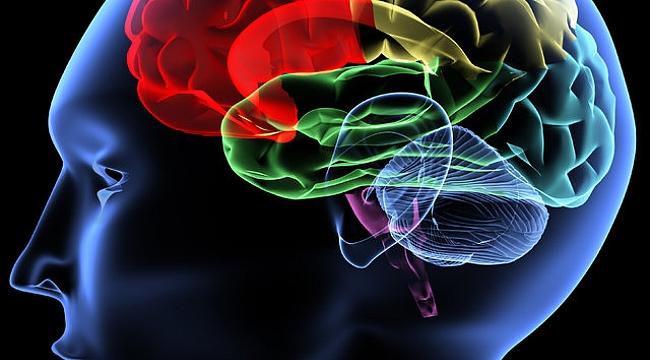 Beyin geliştiren yiyecekler