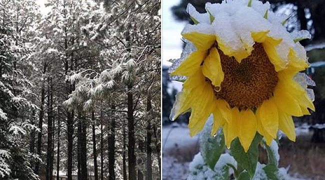 Arizona'ya Kar Yağdı