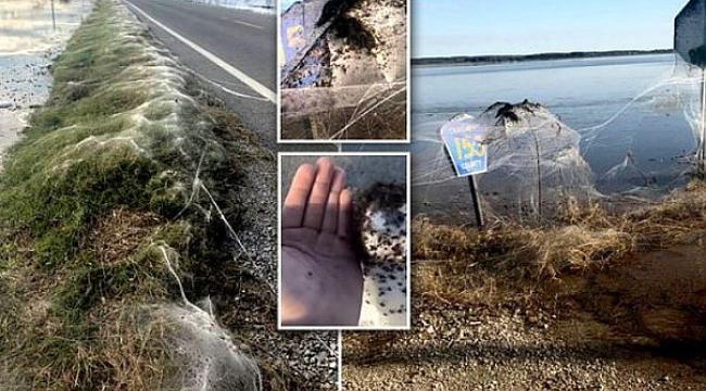 Arkansas'ta Örümcekler Otoyolu İstila Etti