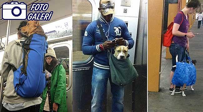 New York Metrosunda Köpekler Böyle Taşınıyor