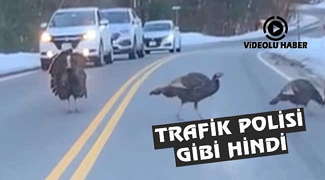 New Hampshire'de Trafik Polisi Gibi Hindi