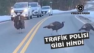 New Hampshire'de Trafik Polisi Gibi Hindi
