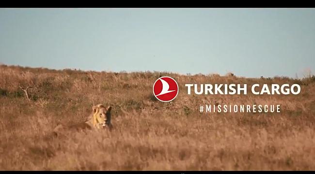 THY Sirkten Kurtarılan Aslanları Afrika'ya taşıdı