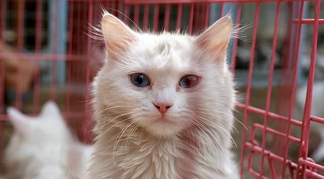 ABD'de Arka Bahçesinde Sahipsiz Kedi Besleyen Kadına Hapis Cezası
