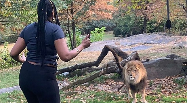New York Polisi Aslan inine giren Kadını Arıyor
