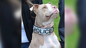 İşkence Gören Pitbull'a New York Polisi Sahip Çıktı