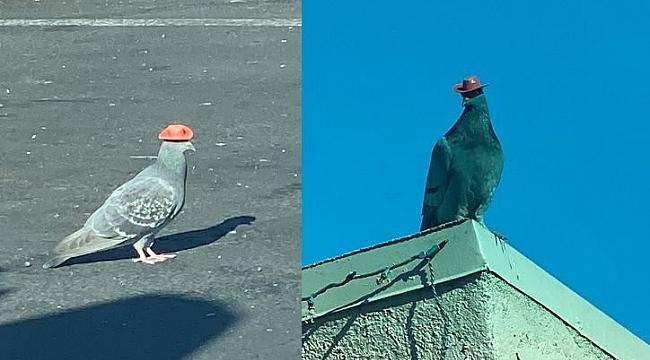 Las Vegas'ta Kovboy Şapkalı Kuşlar