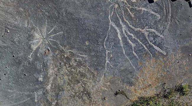 New York'ta En Eski Orman Kalıntıları Bulundu
