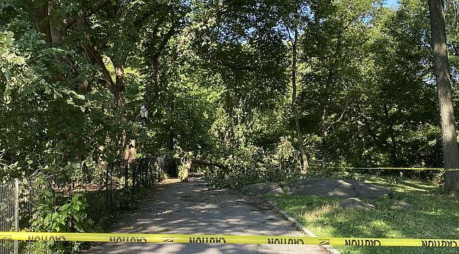 Kasırga Central Park'ta Ağaçları Devirdi