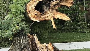 Isaias Kasırgası New York'u da Vurdu