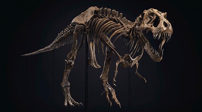 67 Milyon Yıllık Dinozor İskeleti Satıldı