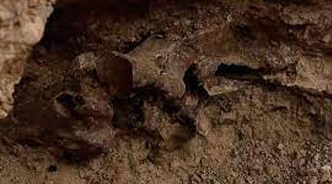 Las Vegas'taki Evden 'Buz Çağı' Fosili Çıktı!