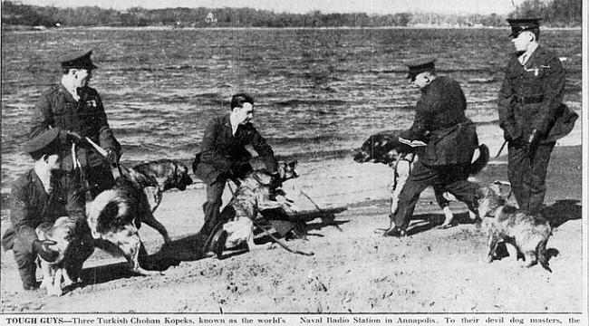 ABD Donanması'nın Erzurumlu Köpekleri