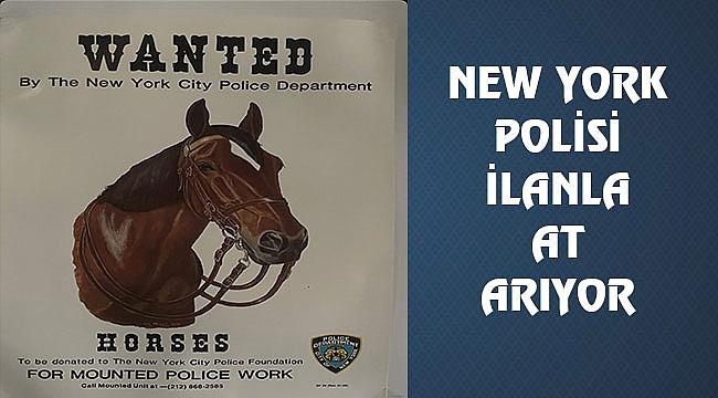 NYPD, İlanla At Arıyor