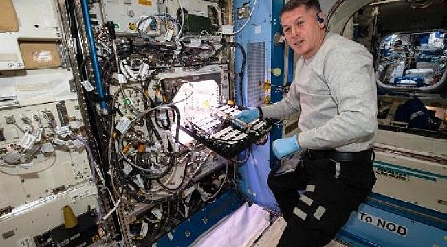 NASA Uzayda Acı Biber Yetiştiriyor!