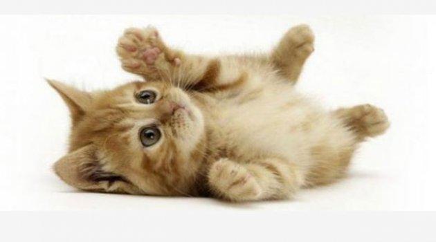 Kediler 9 bin yıldır insanlarla yaşıyorlar
