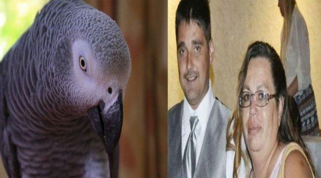 Papağanın 'tanık olduğu' cinayette karar