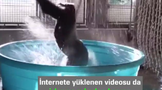 Suda Dans Eden Goril Dünya Gündeminde